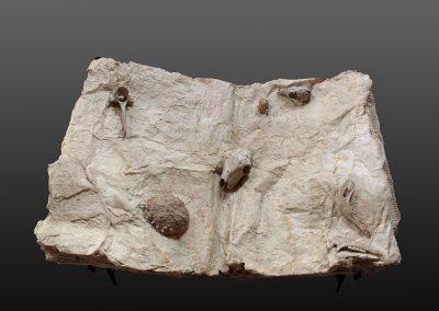 cuaderno-de-historia-natural-vista-pajaro